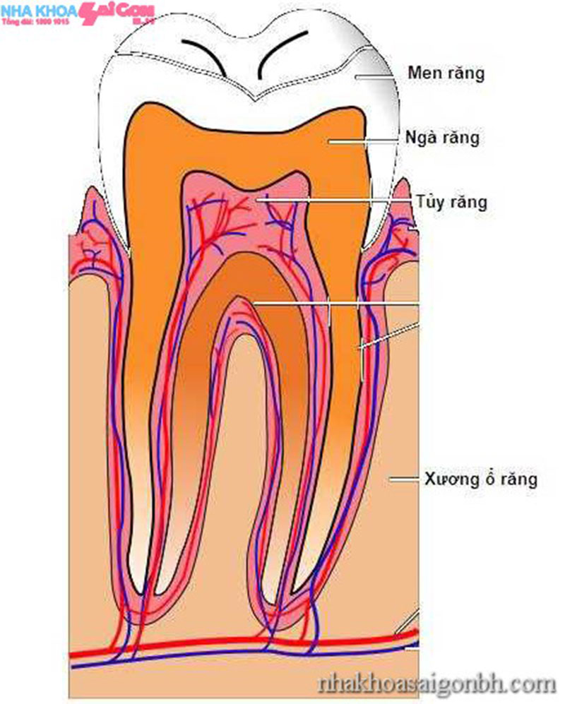 Khi nào nên lấy tủy răng tốt nhất? Trường hợp cụ thể